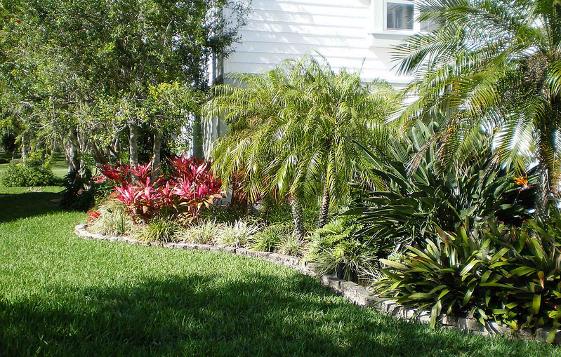 a side garden with leafy plants