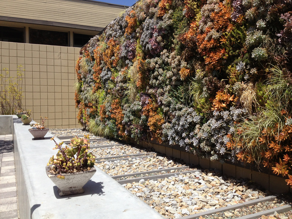 a backyard with succulent wall full of plant